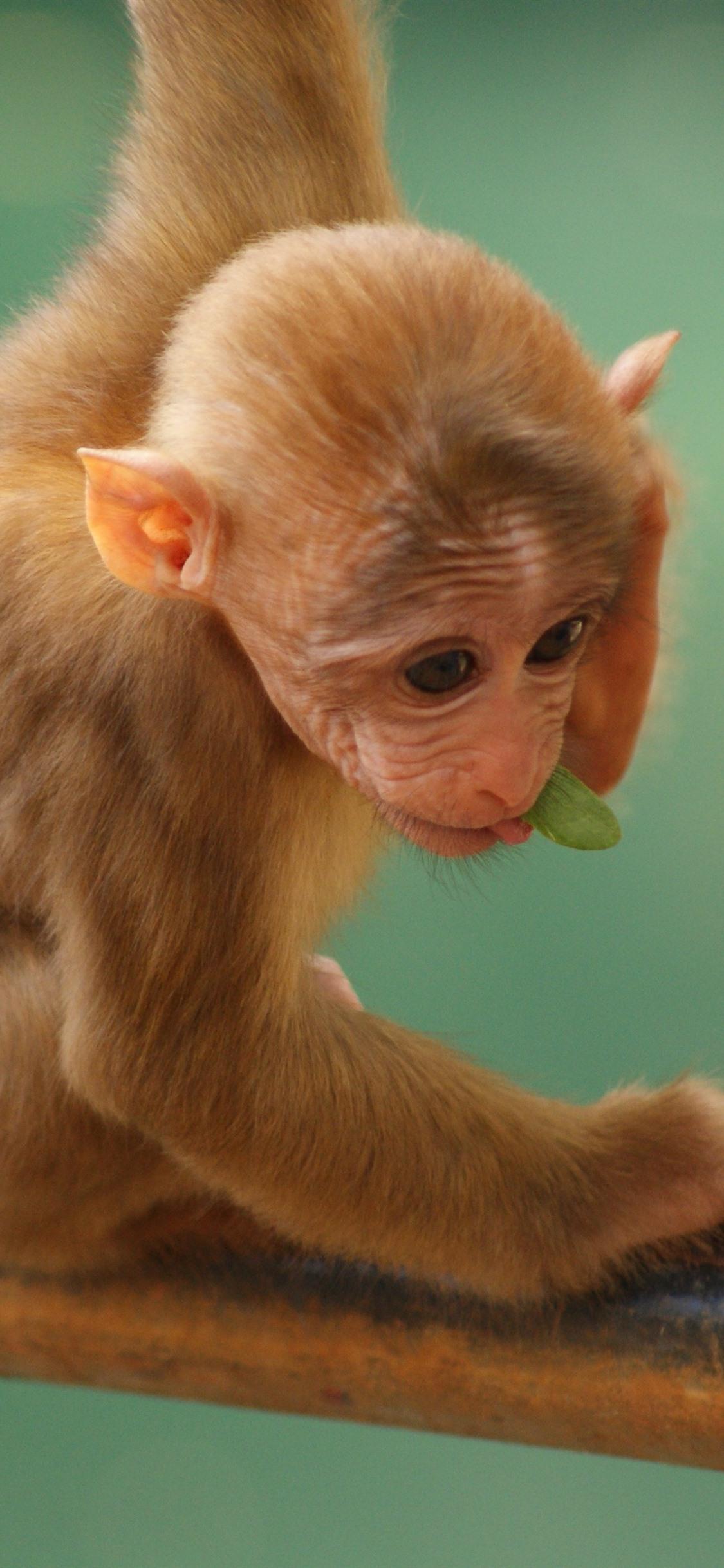 Cute Small Monkey 1125x2436 Iphone Xs X Wallpaper