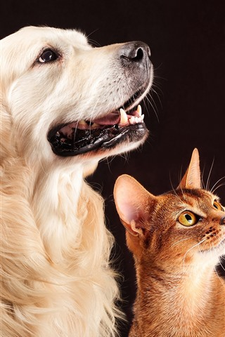 iPhone Wallpaper Dog and cat, friends, pets
