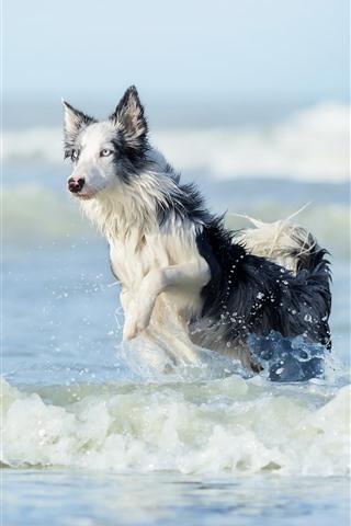 iPhone Wallpaper Dog walking on the beach, water, sea, waves