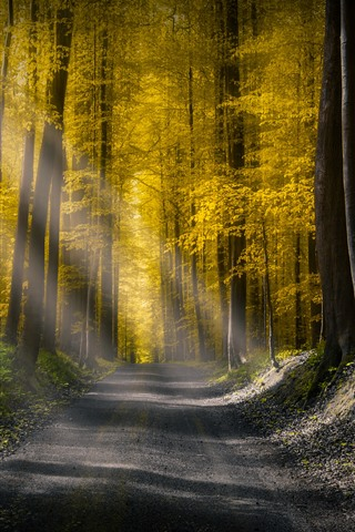 iPhone Wallpaper Forest, road, sun rays, morning, autumn