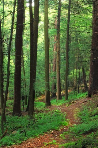 Forest Trees Green Nature Scenery 1242x2688 Iphone 11 Pro Xs Max Wallpaper Background Picture Image