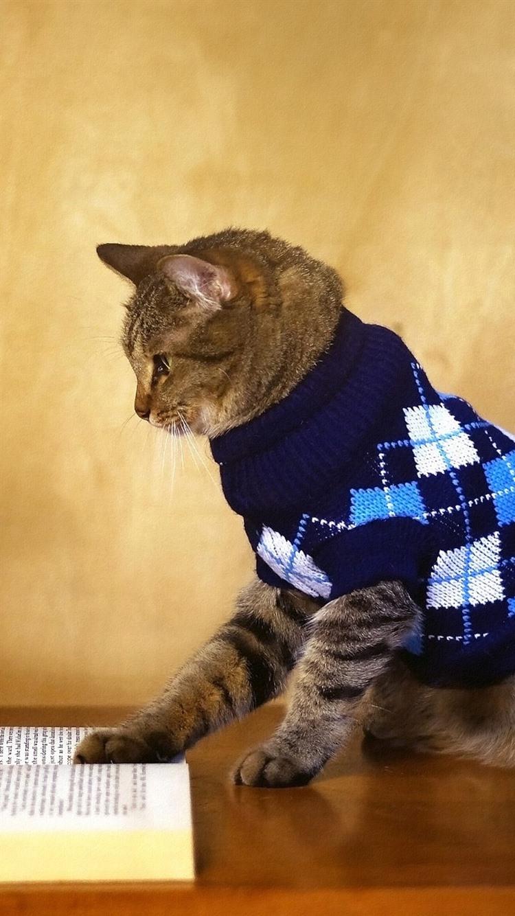 面白い動物 猫の本を読んで セーター 750x1334 Iphone 8 7 6 6s 壁紙 背景 画像