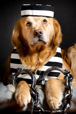 iPhone Wallpaper Funny dog, prisoner, chain