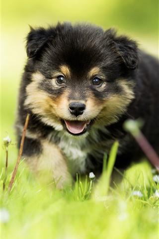 iPhone Wallpaper Furry puppy, green grass