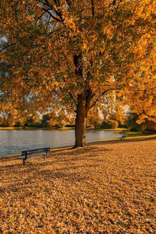 iPhone Wallpaper Golden autumn, trees, leaves, bench, park, lake
