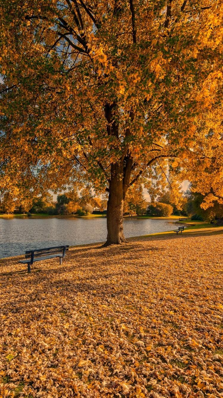 Golden Autumn Trees Leaves Bench Park Lake 750x1334