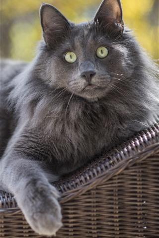 iPhone Wallpaper Gray cat, green eyes, rest
