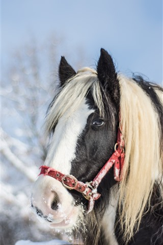 iPhone Wallpaper Horse, mane, face, snow, winter
