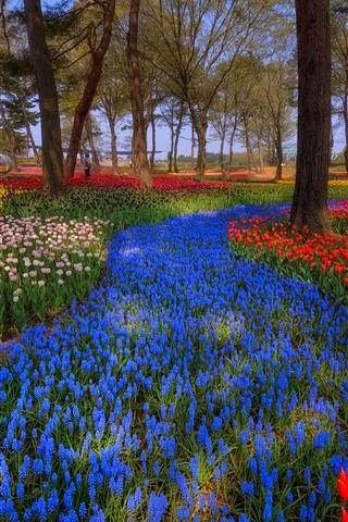 iPhone Wallpaper Japan, park, trees, colorful tulips, spring