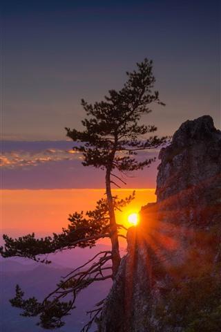 iPhone Wallpaper Mountain, cliff, tree, sun rays, sunrise, morning