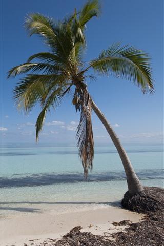 iPhone Papéis de Parede Uma palmeira, mar, praia