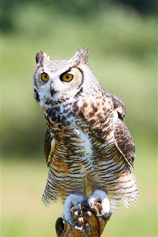 iPhone Wallpaper Owl, bird, standing, wood stick