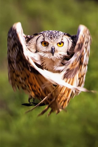 iPhone Wallpaper Owl flight, wings, moment