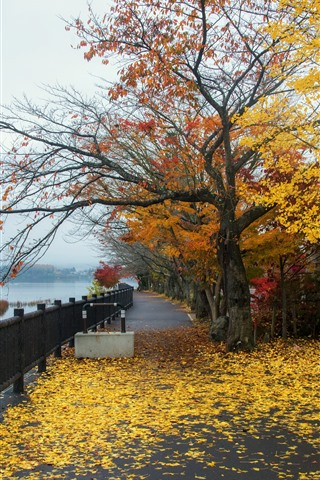 Park Trees Yellow Leaves Autumn Fence River 1242x2688