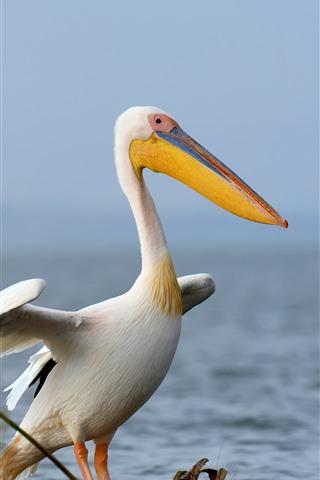 iPhone Wallpaper Pelican, birds, lake