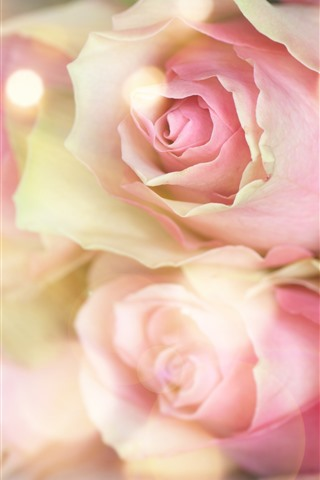 iPhone Wallpaper Pink roses, hazy, romantic