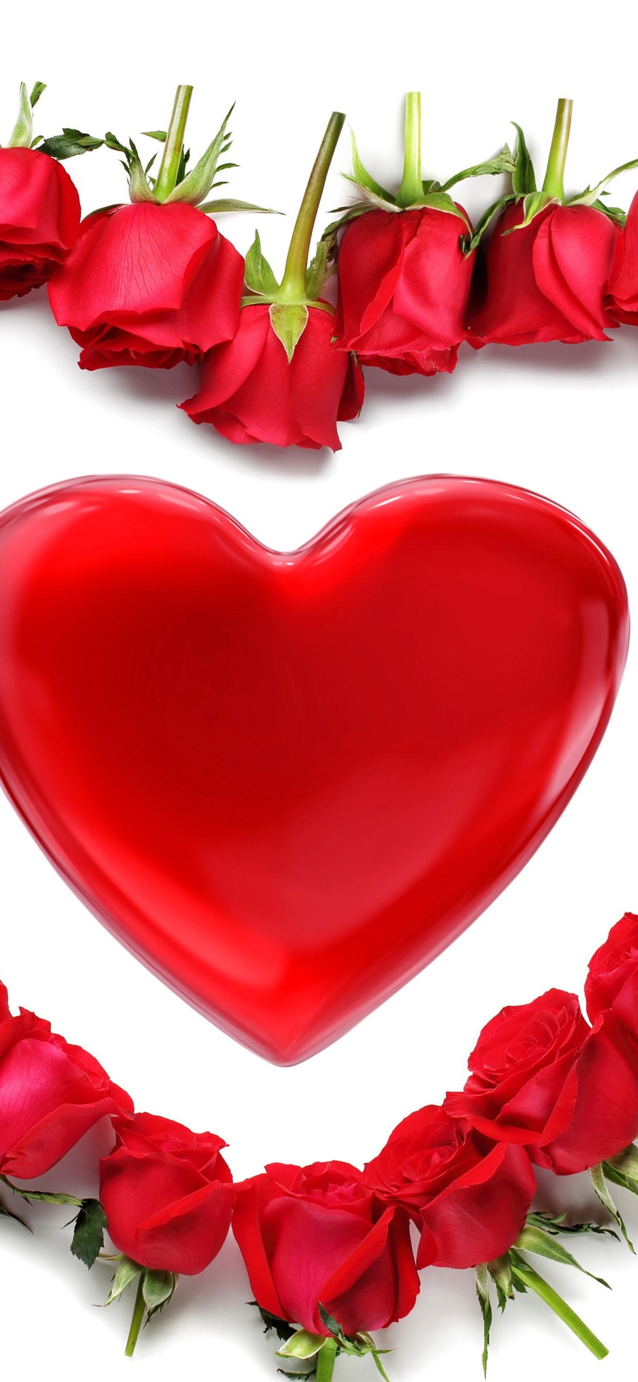 Red love heart roses white background