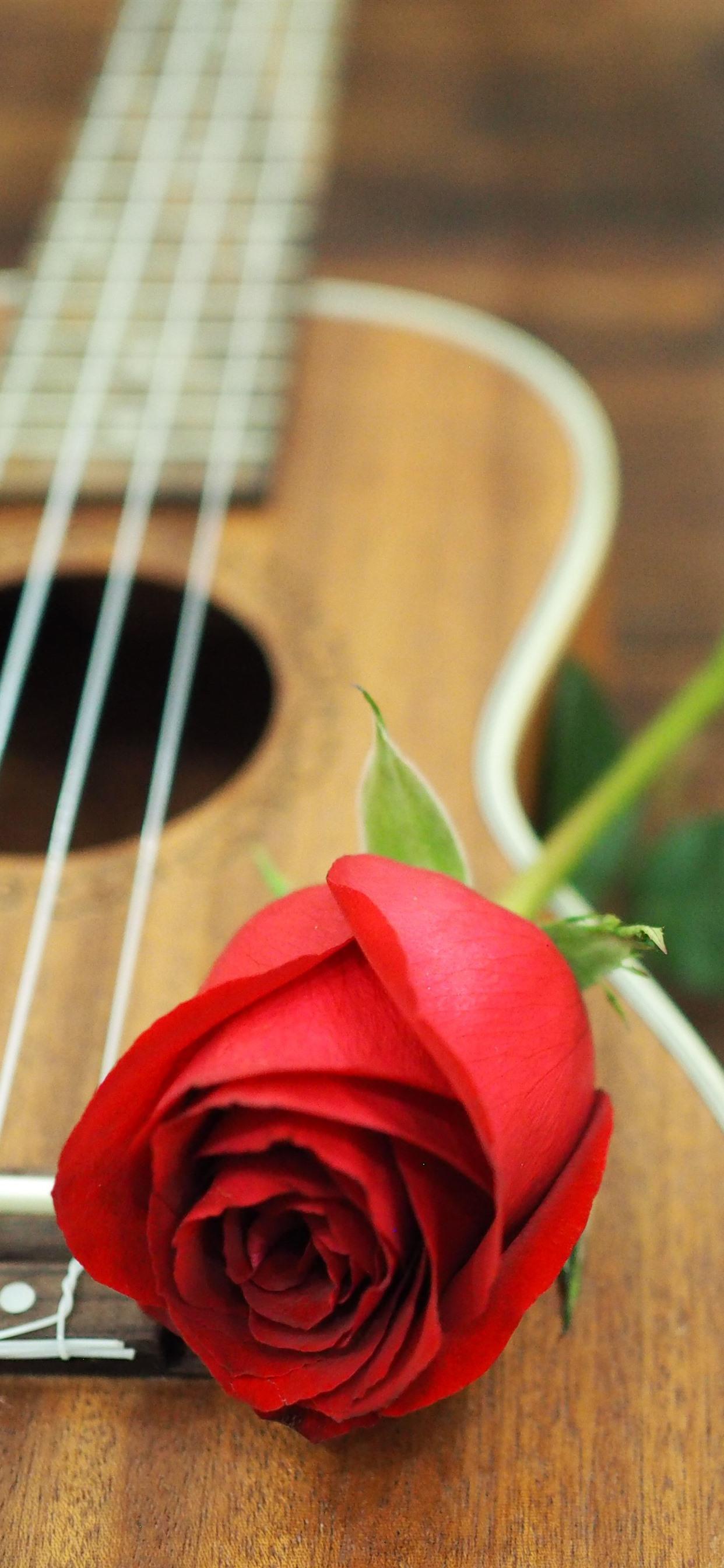 Red Rose Guitar 1242x2688 Iphone Xs Max Wallpaper