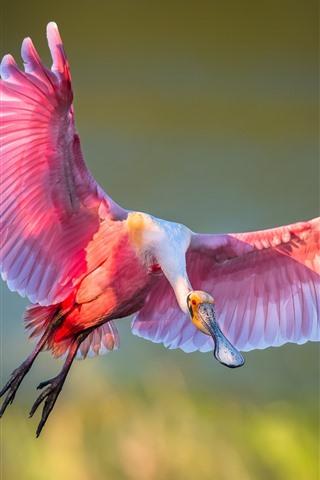 iPhone Wallpaper Roseate spoonbill, flight, wings