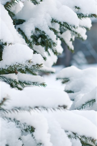iPhone Wallpaper Spruce, thick snow, winter