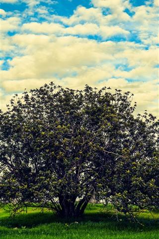 iPhone Wallpaper Summer, trees, grass, sky, clouds