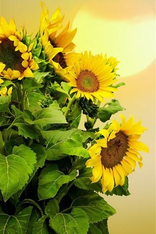 iPhone Wallpaper Sunflowers, sun