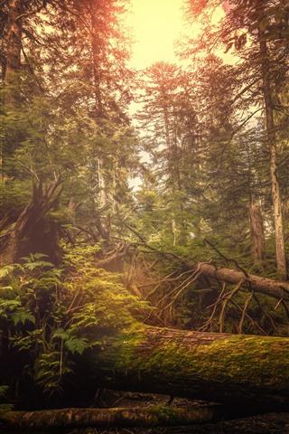 iPhone Обои Швейцария, лес, деревья, блики