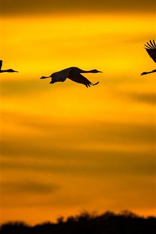 iPhone Wallpaper Three birds flight in sky, silhouette, sunset