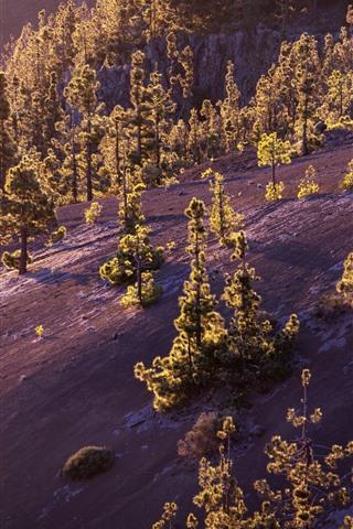 iPhone Wallpaper Trees, slope, morning, sunshine