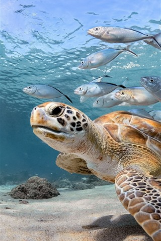 iPhone Wallpaper Turtle and fish, sea, underwater