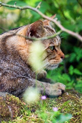 iPhone Wallpaper Wildcat, twigs, nature