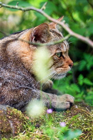iPhone Обои Дикая кошка, веточки, природа