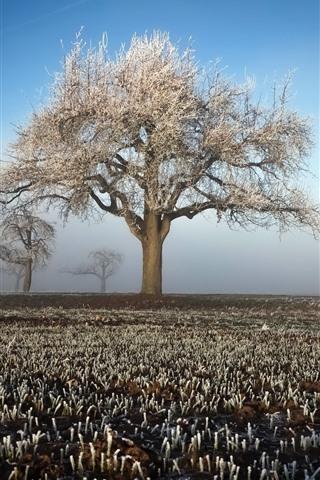 iPhone Wallpaper Winter, tree, fields, frost