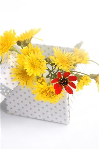 iPhone Wallpaper Yellow flowers, box, gift, white background
