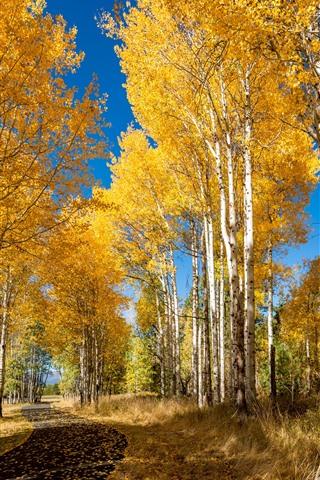 iPhone Wallpaper Autumn, birch, forest, golden leaves