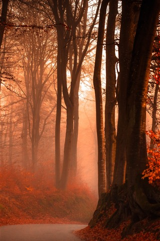 iPhone Wallpaper Autumn, red leaves, trees, road, fog