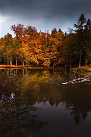 iPhone Wallpaper Autumn, trees, pond, water reflection