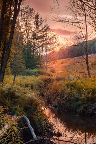 iPhone Wallpaper Autumn, trees, stream, sunset