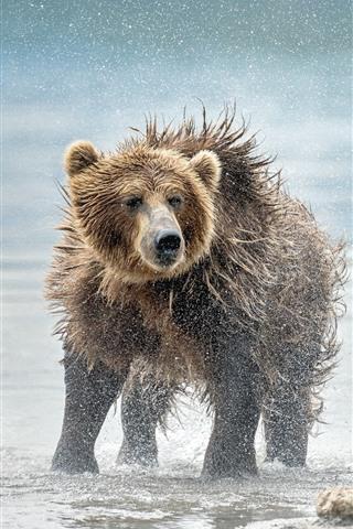 iPhone Wallpaper Bear mother and cub, water splash, river shore