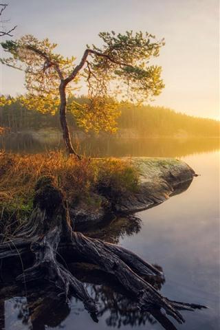 iPhone Wallpaper Beautiful autumn, lake, trees, sun rays, morning