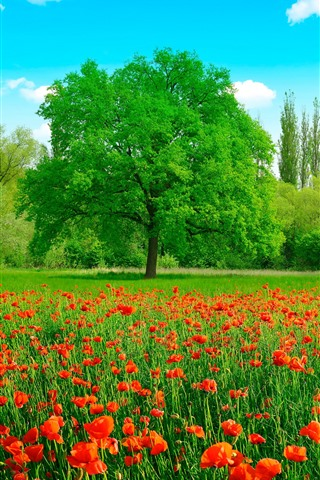 iPhone Wallpaper Beautiful summer, red poppy flowers, green grass and trees, sun rays