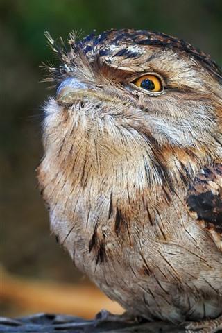 iPhone Wallpaper Bird, look, beak