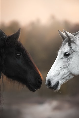 iPhone Wallpaper Black and white horses, face to face