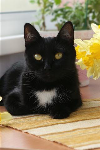 iPhone Wallpaper Black cat, yellow daffodils