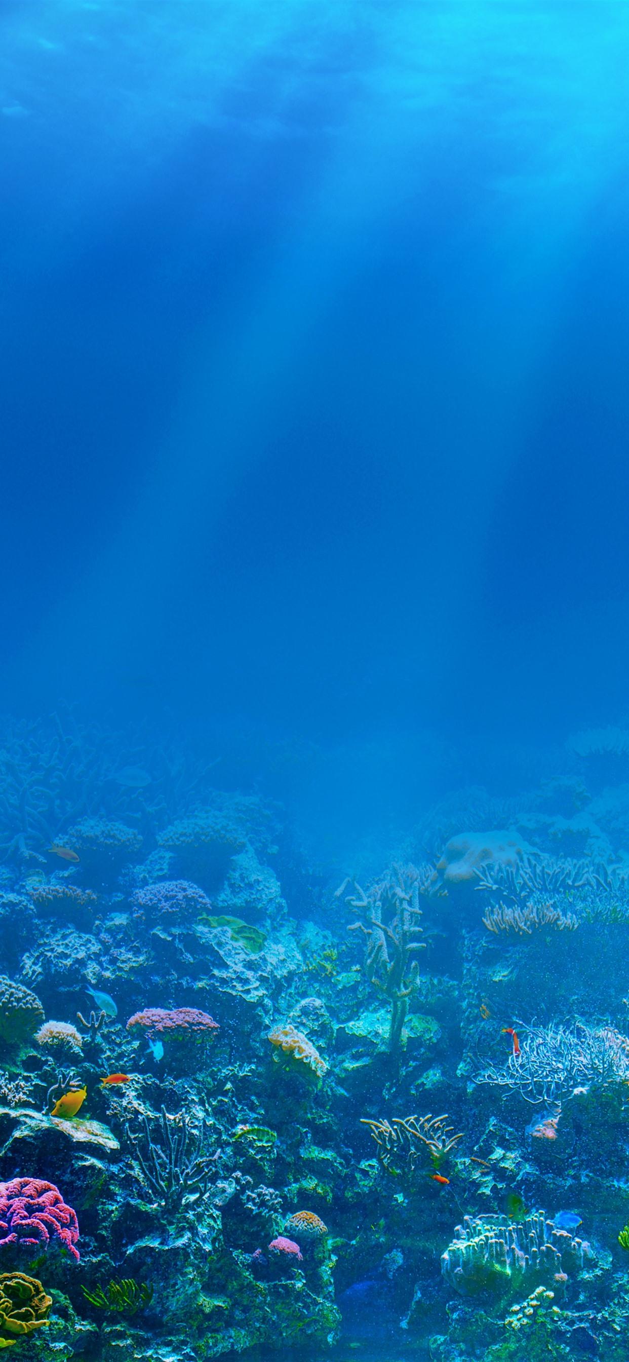 Blue Sea Underwater Sun Rays Fish Coral 1242x2688 Iphone