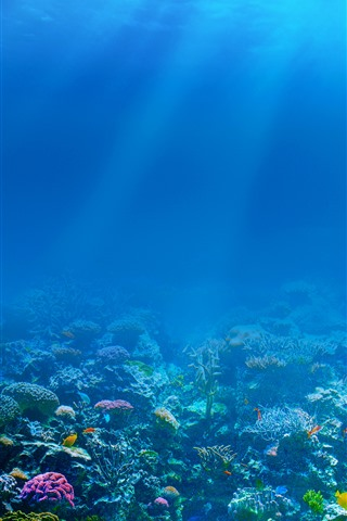 iPhone Wallpaper Blue sea, underwater, sun rays, fish, coral