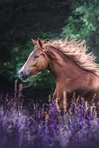 iPhone Wallpaper Brown horse running, lavender flowers
