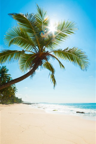 iPhone Wallpaper Caribbean, sea, beach, palm trees, sun rays, tropical