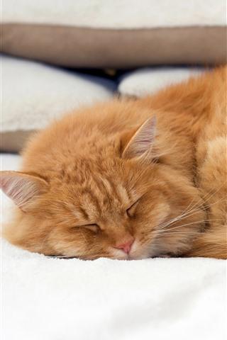 iPhone Wallpaper Cat in sleeping, bed, pillow