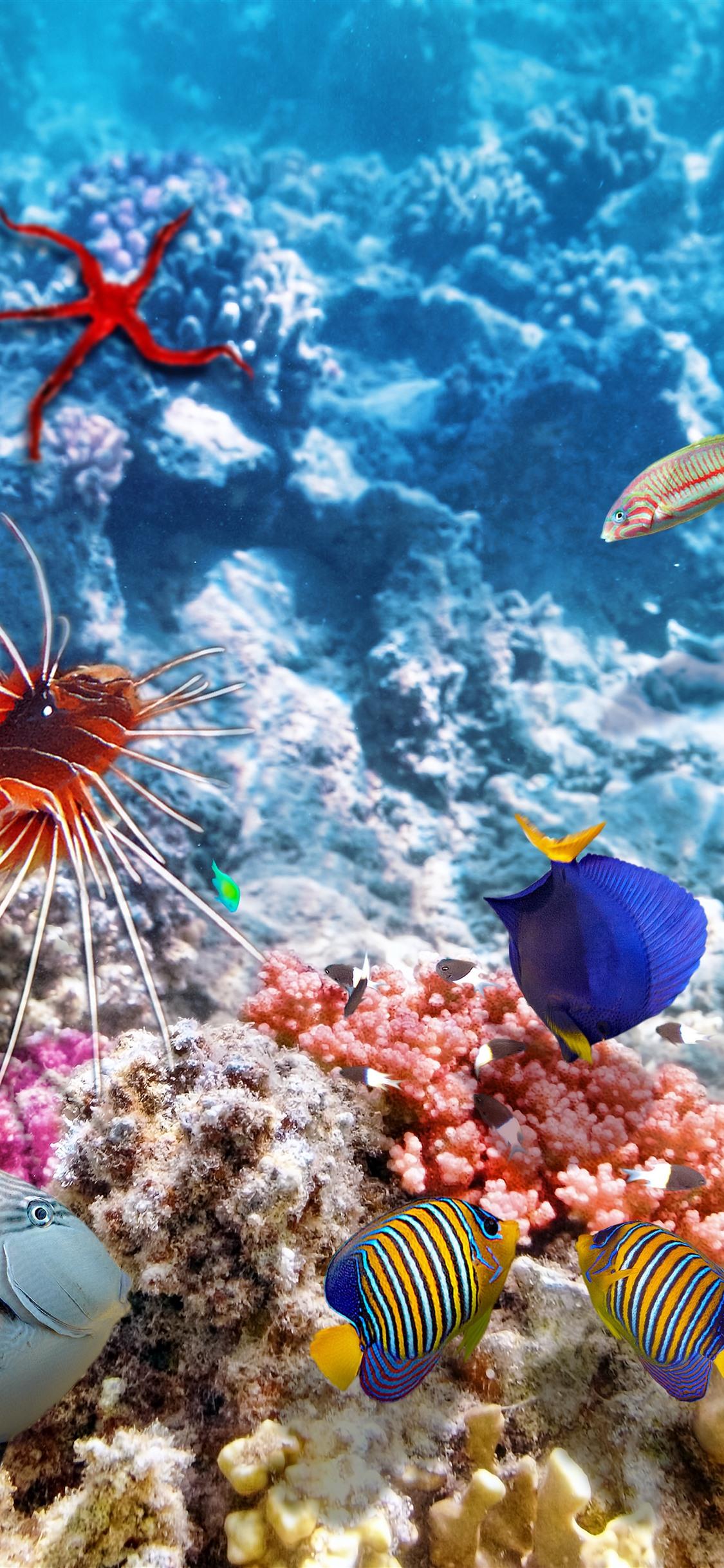 Colorful fish, underwater, sea, clownfish 21x21 iPhone 21 Pro ...